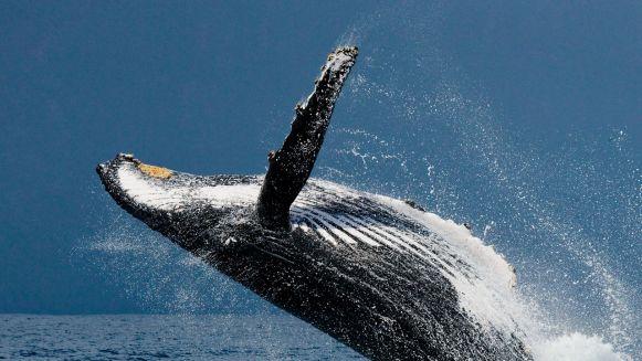 lodowa-laguna-spiewajacych-wielorybow
