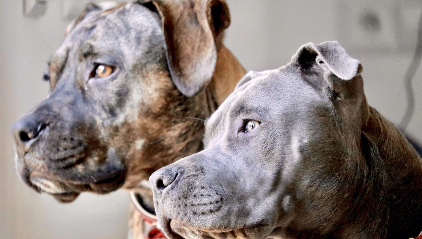 Zwierzęta były trzymane w klatkach (fot. Shutterstock)