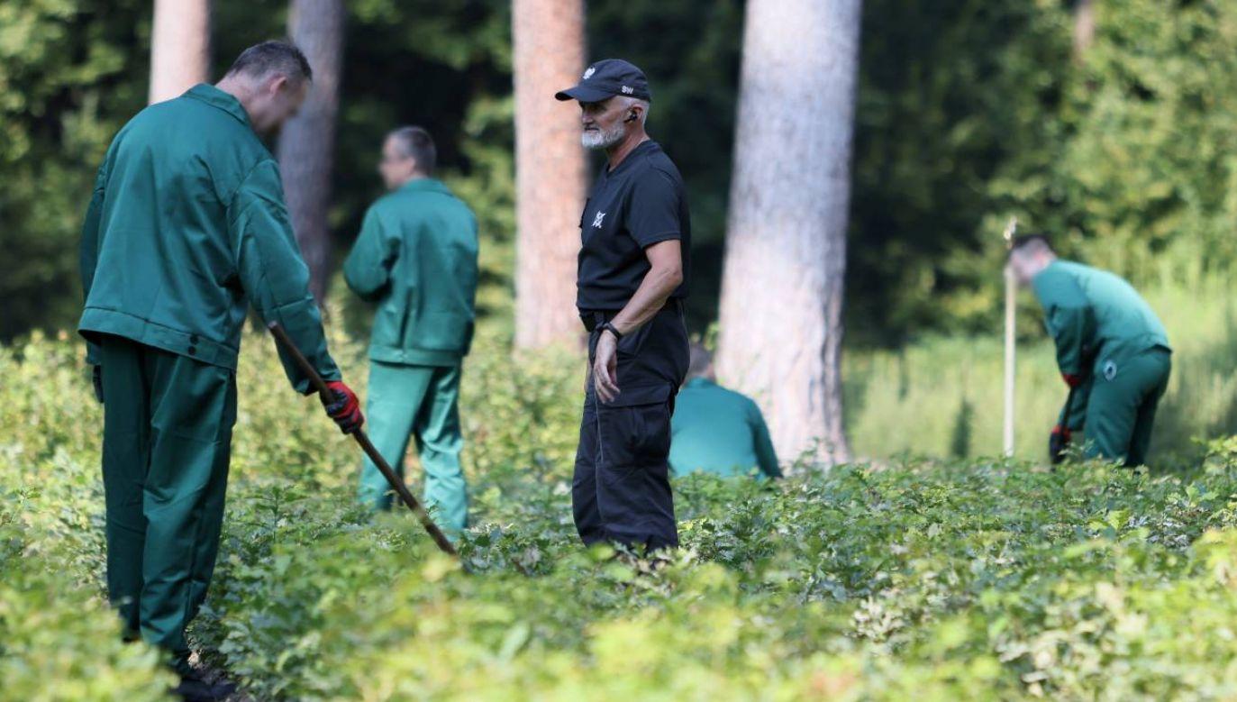 Praca pomoże więźniom w resocjalizacji (fot. PAP/Leszek Szymański)