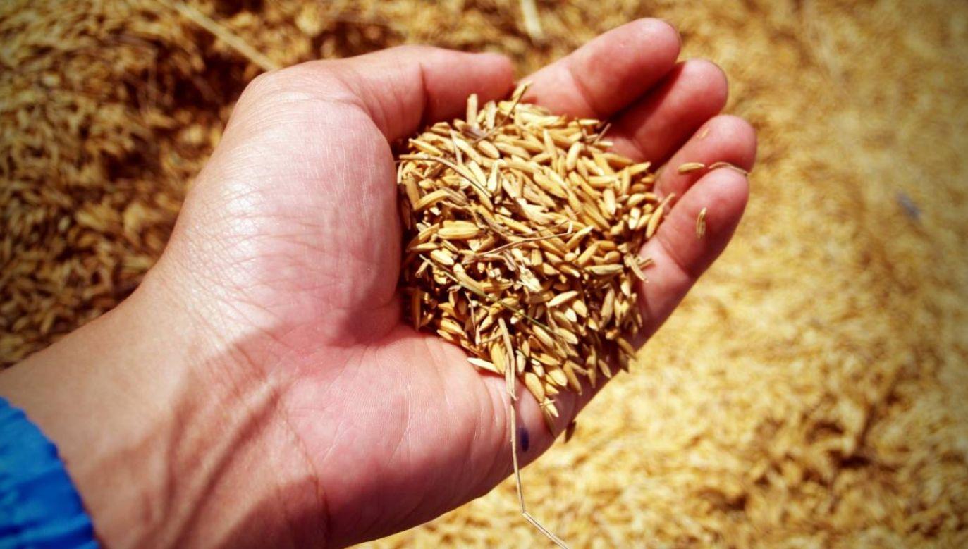Kosmiczny ryż pomoże w wyselekcjonowaniu najlepszych genów (fot. Pexels)