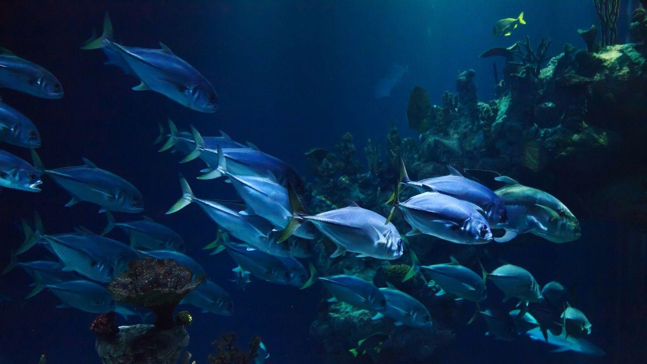 Ryby i ich ruch (fot. PIxabay)