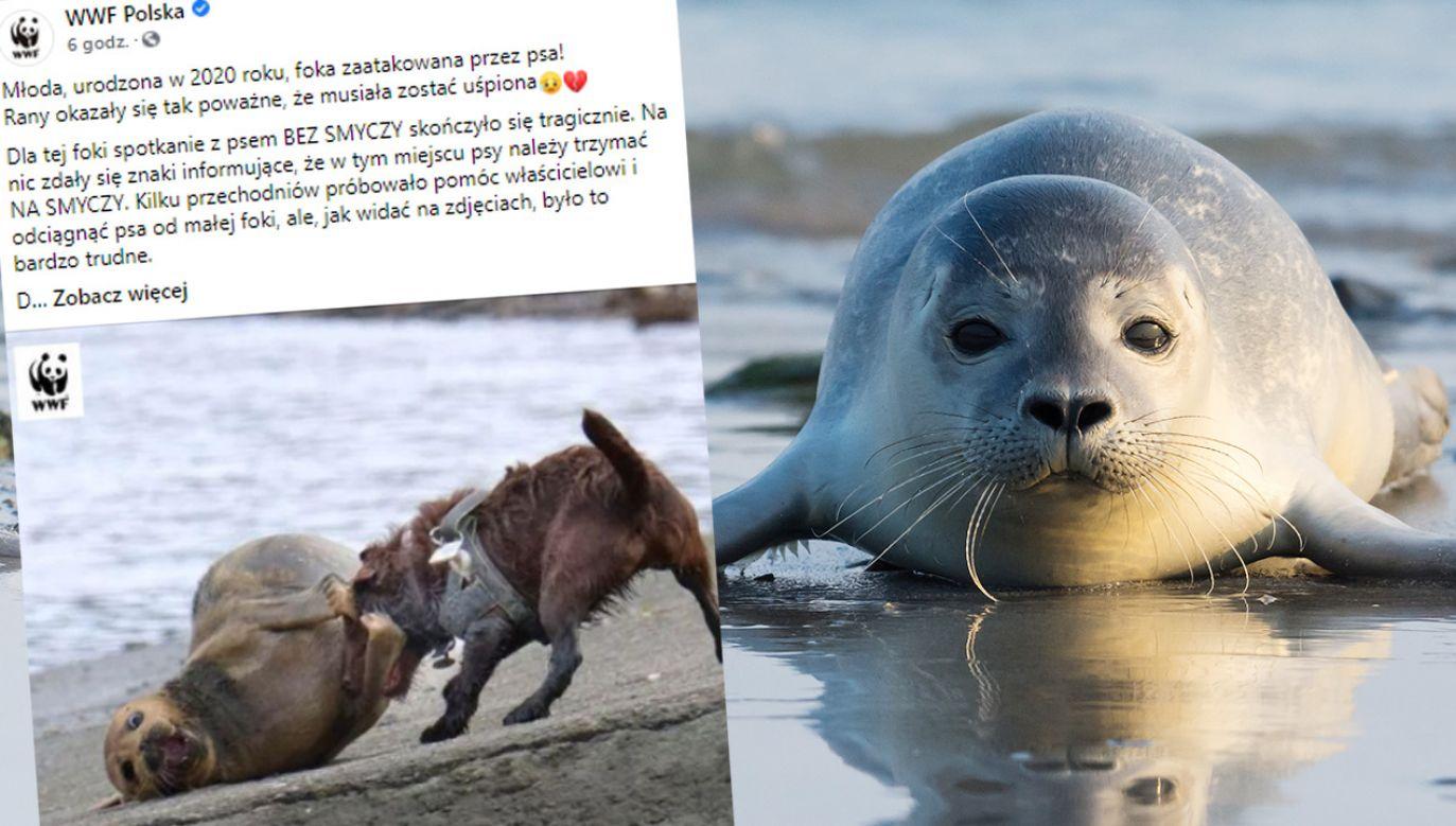 Foka była uwielbiana przez londyńczyków (fot. Facebook/WWF Polska; Shutterstock)