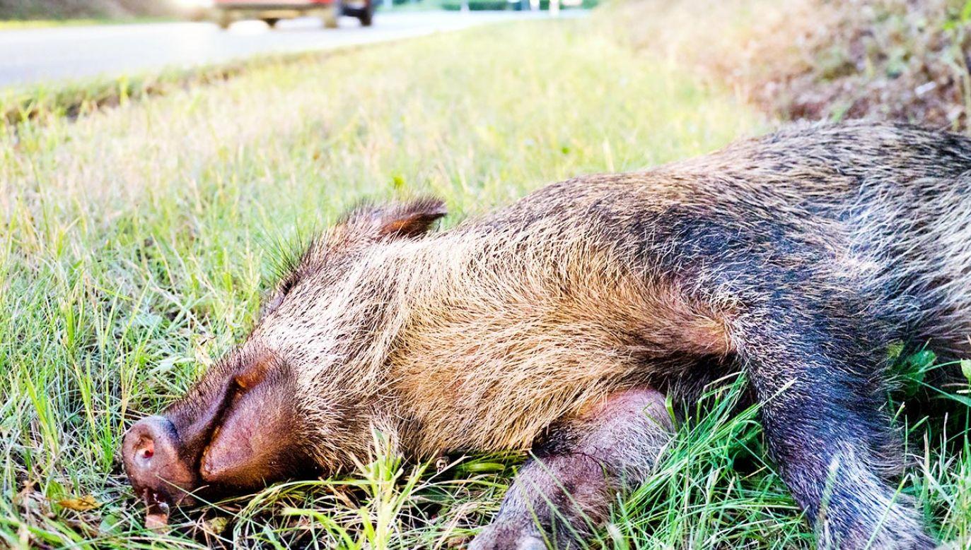 Tragedia pod Włocławkiem (fot. Shutterstock; zdjęcie ilustracyjne)
