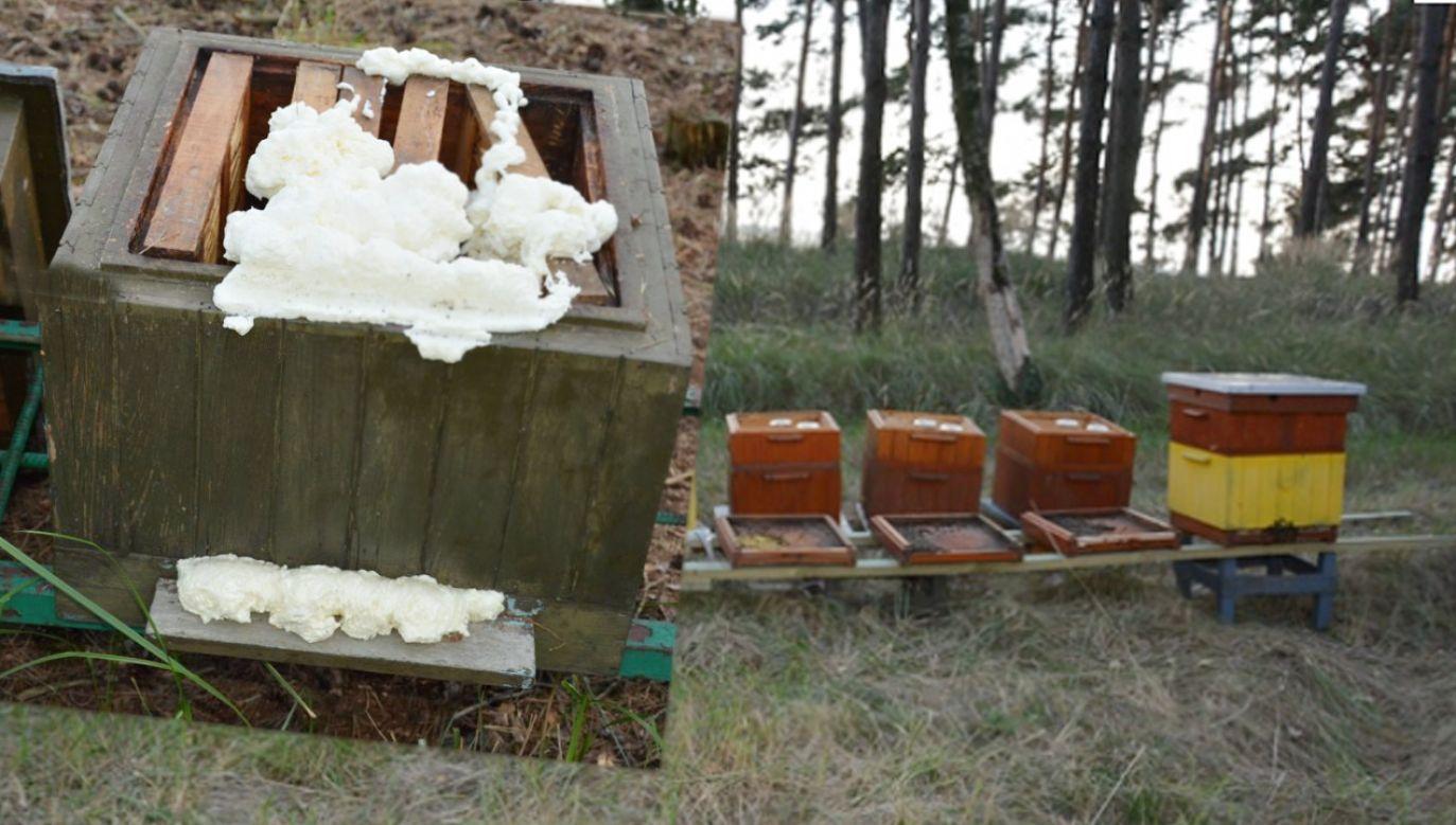 Pszczoły otruto środkiem chemicznym (fot. Policja)