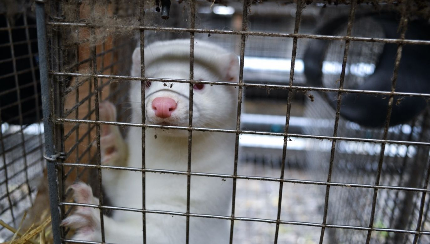 Kryzys w koalicji rządowej po głosowaniu w sprawie ustawy o ochronie zwierząt (fot. Shutterstock/Lynsey Grosfield)