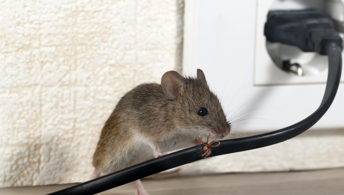 Oprócz badań na myszach naukowcy wystawiali również ludzkie komórki wątroby na działanie pól elektromagnetycznych przez sześć godzin  (fot. Shutterstock/torook)