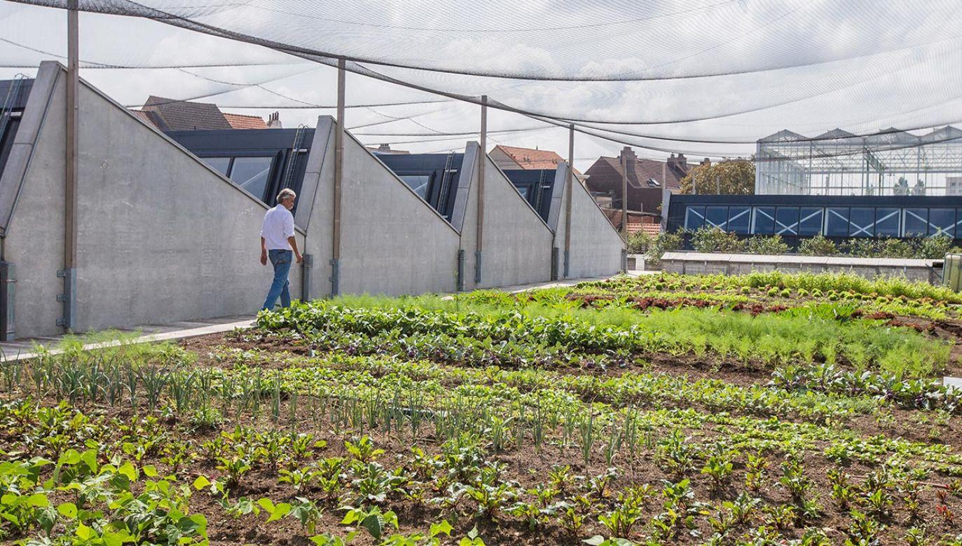 W samym sercu Brukseli na dachu hali spożywczej powstała miejska farma (fot. PAP/EPA/STEPHANIE LECOCQ)