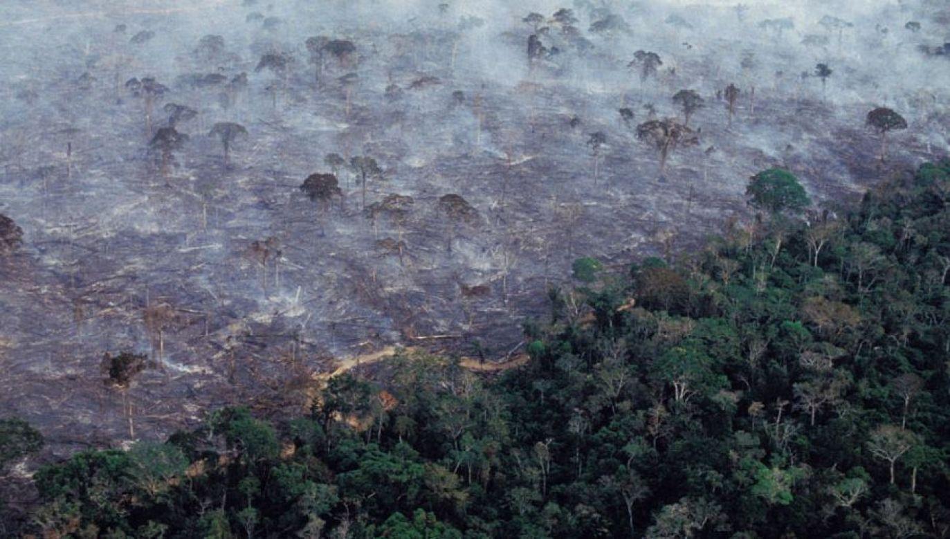 Lasy w Amazonii są niszczone na wielką skalę (Ricardo Funari/Brazil Photos/LightRocket via Getty Images)