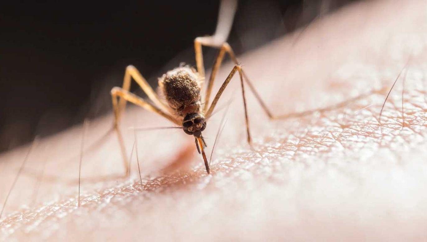 Samice rozprzestrzeniają groźne choroby (fot. Pexels)
