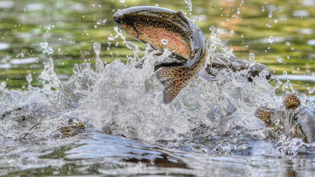 Ryby uzależniają się od narkotyków (fot. Shutterstock)