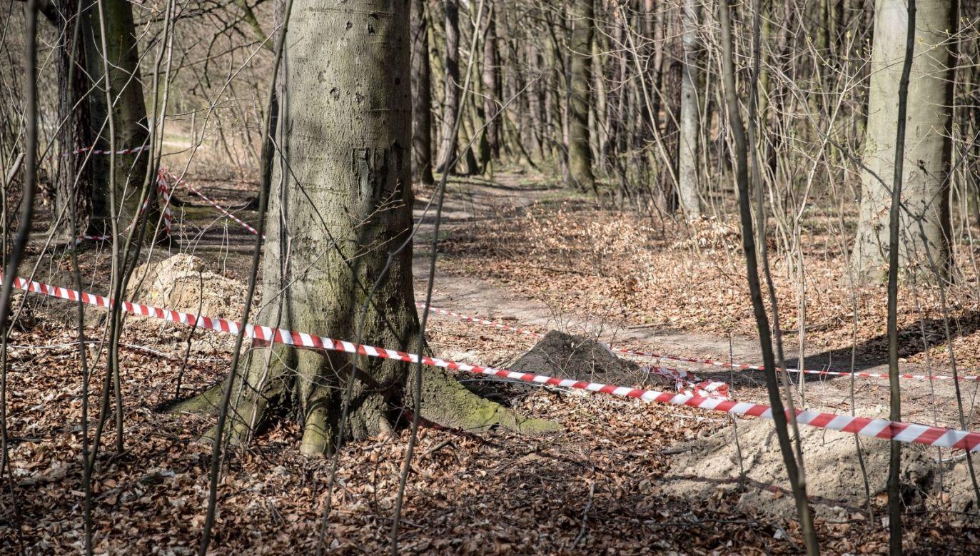 Zamknięty las w Krakowie (fot. PAP/Łukasz Gągulski)