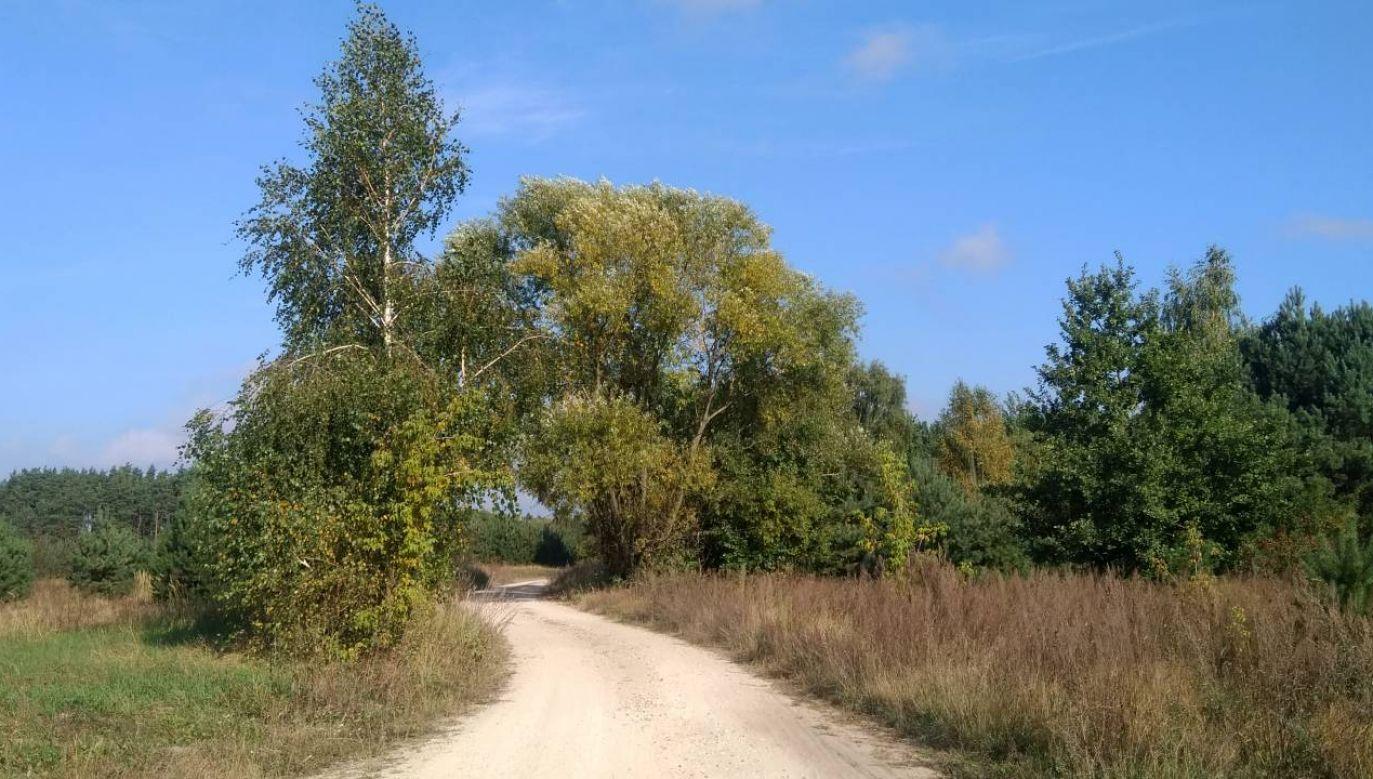 Wtorek będzie słoneczny we wschodniej połowie kraju (fot. tvp.info/łz)