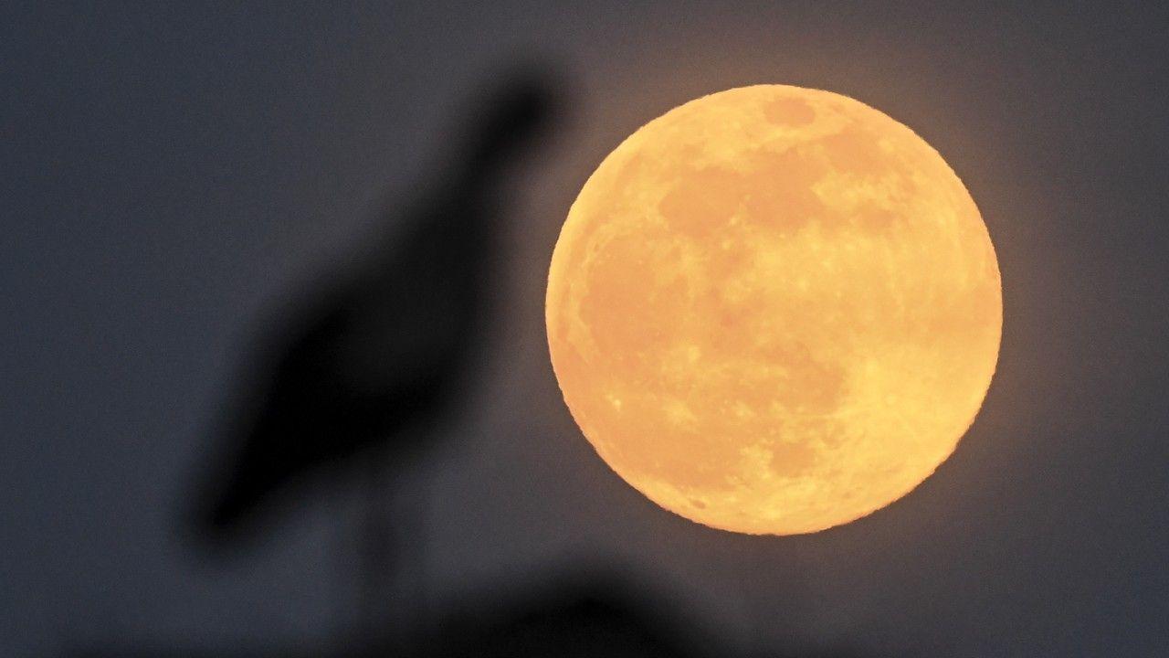 Różowy Księżyc to pierwsza superpełnia w tym roku (fot. PAP/EPA/GEORGI LICOVSKI)