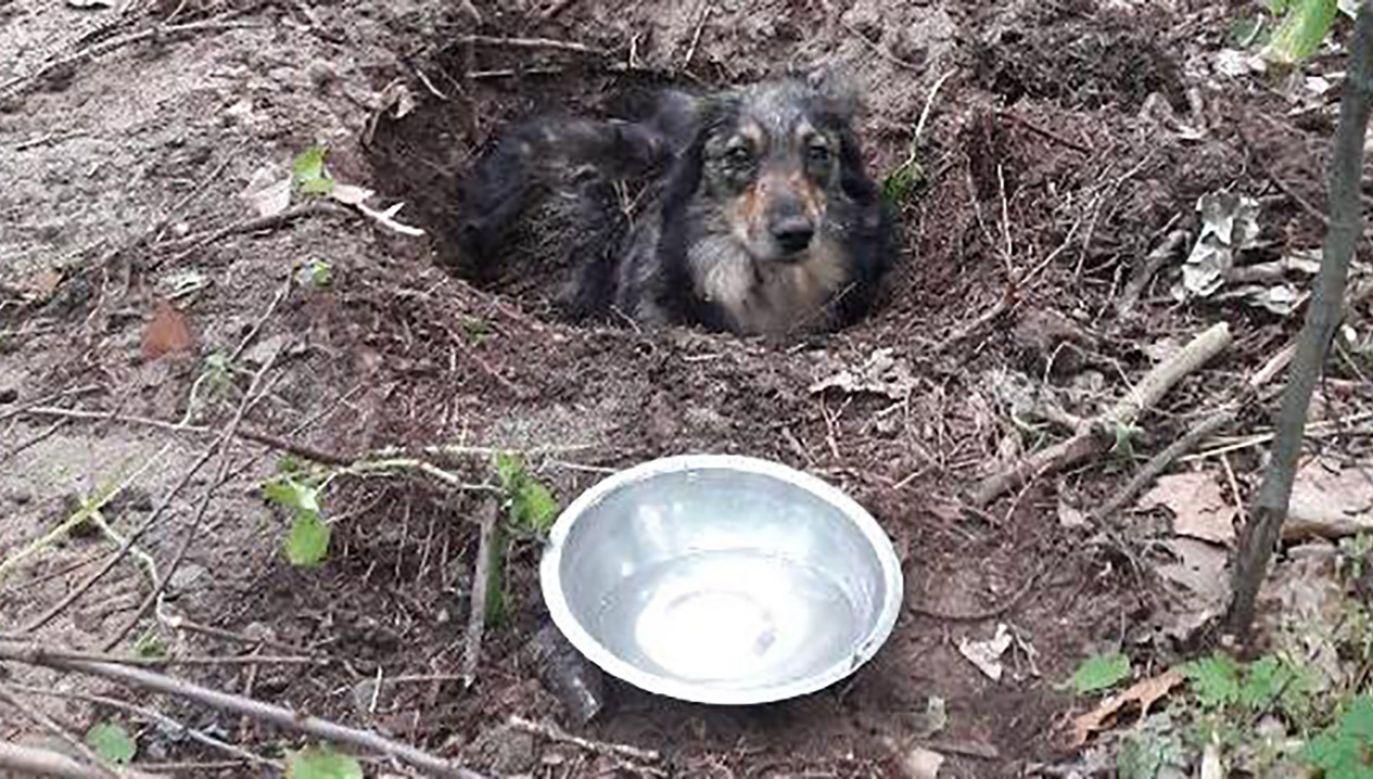 Policja apeluje do mieszkańców Huty Komorowskiej i okolicznych miejscowości o pomoc w ustaleniu właściciela znalezionego psa (Fot. Policja podkarpacka)