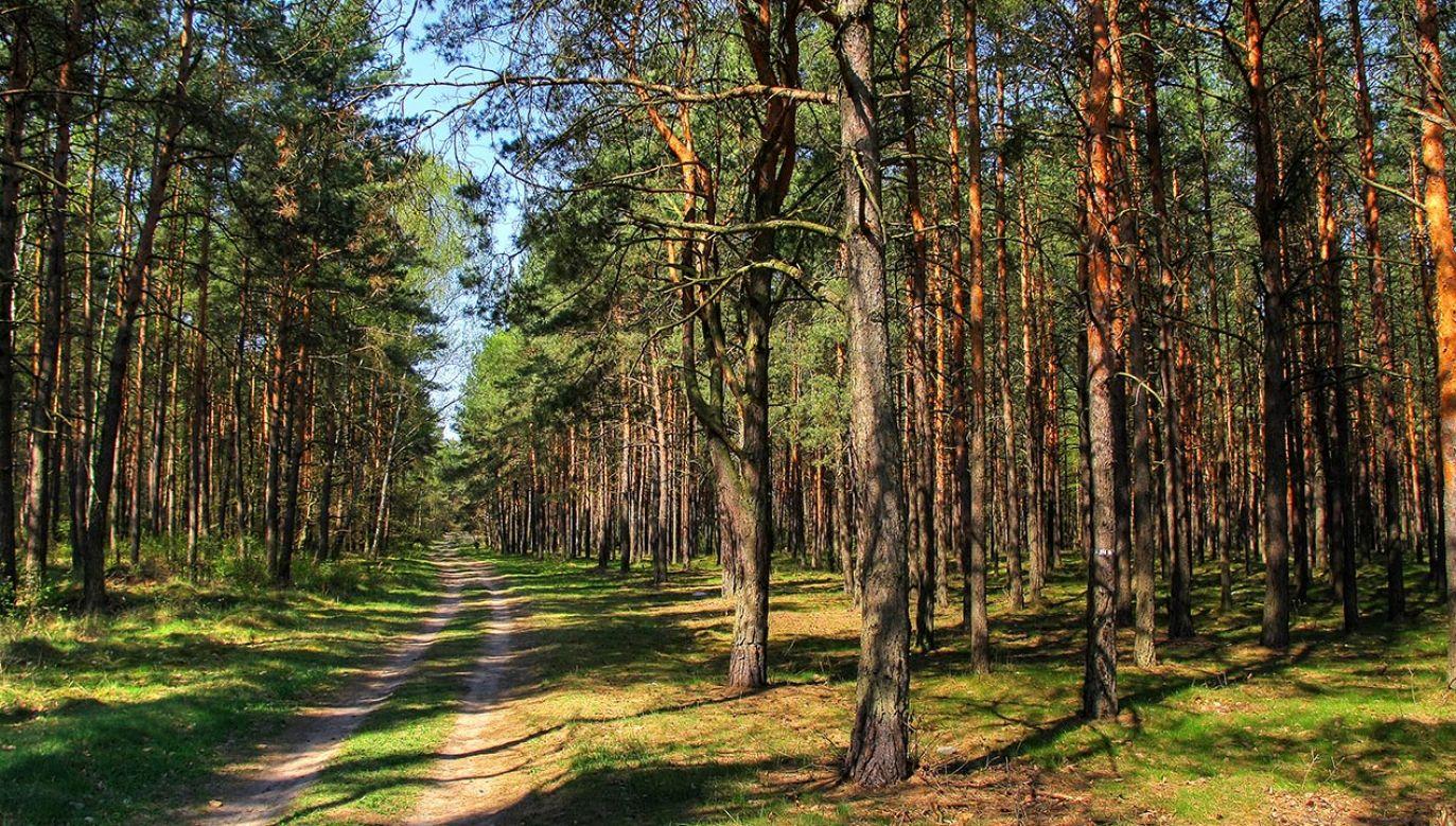 Lasy Państwowe mają nowego dyrektora (fot. Shutterstock/Patryk Kosmider)