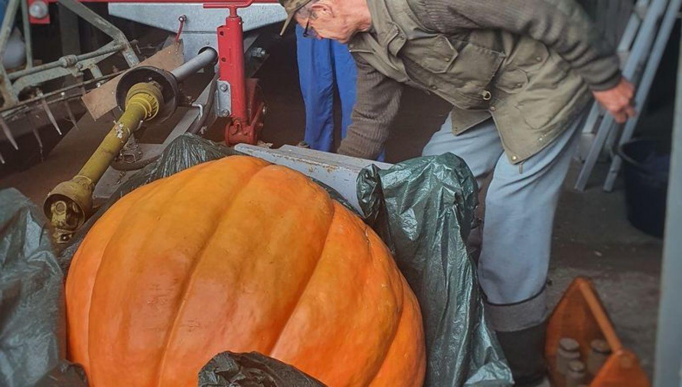 Jak się okazało dynia wyhodowana przez byłego leśniczego ważyła 112 kilogramów (fot.Facebook/Nadleśnictwo Szczecinek, Lasy Państwowe)