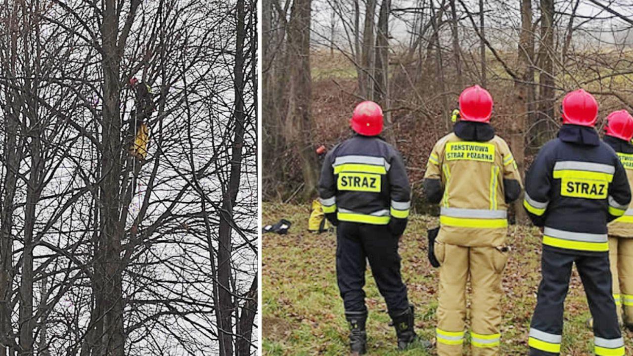 Strażacy długo nie mogli dotrzeć do wystraszonego zwierzaka (fot. Facebook/OSP KSRG Lipnica Murowana)