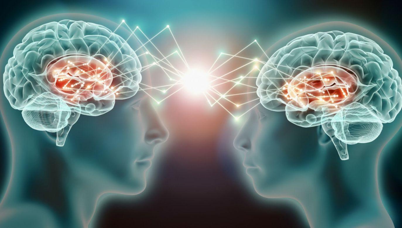 Patrząc na działanie mózgu, da się powiedzieć, czy ktoś jest kobietą czy mężczyzną (fot. Shutterstock/MattLphotography)