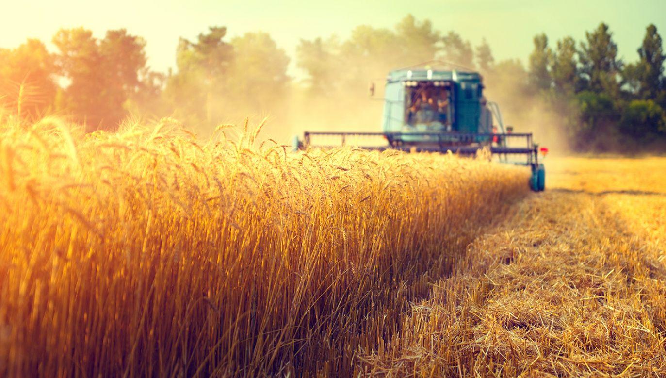 Komisarz podkreślił też, że wyrównanie dopłat dla rolników będzie jednym z priorytetów jego kadencji (fot. Shutterstock/Subbotina Anna)