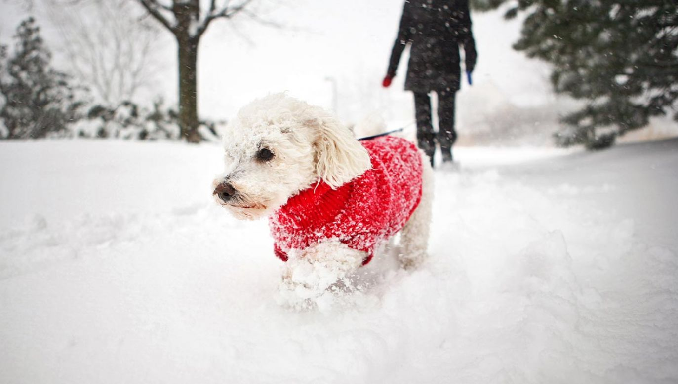 Od kilku dni w Polsce utrzymują się bardzo niskie temperatury (fot. Shutterstock/N K)