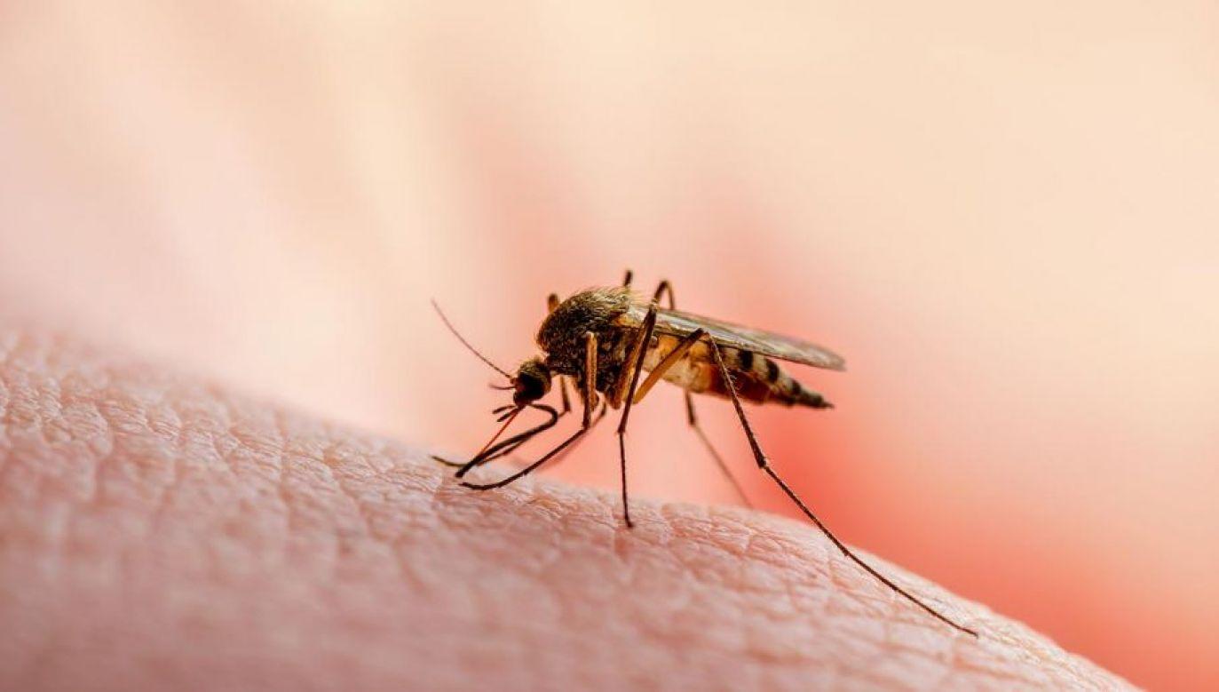 Wirusy zika, denga i chikungunya stały się zagrożeniami dla zdrowia ludzi w wielu częściach świata (fot. Shutterstock/nechaevkon)